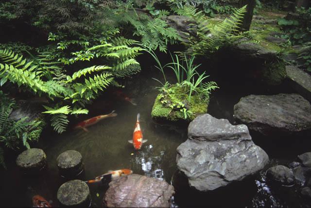 Japanese Gardens Elements Pond Shorelines