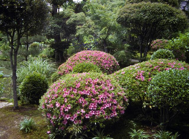 Japanese gardens elements shrubs for Plants found in japanese gardens